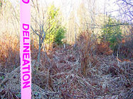 Pic-Delineation3 187
