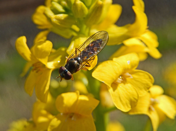 bug on flower 600