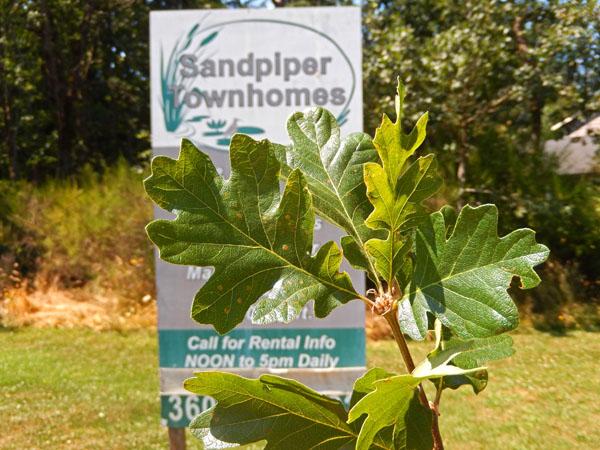 Oak Habitat Management Plan